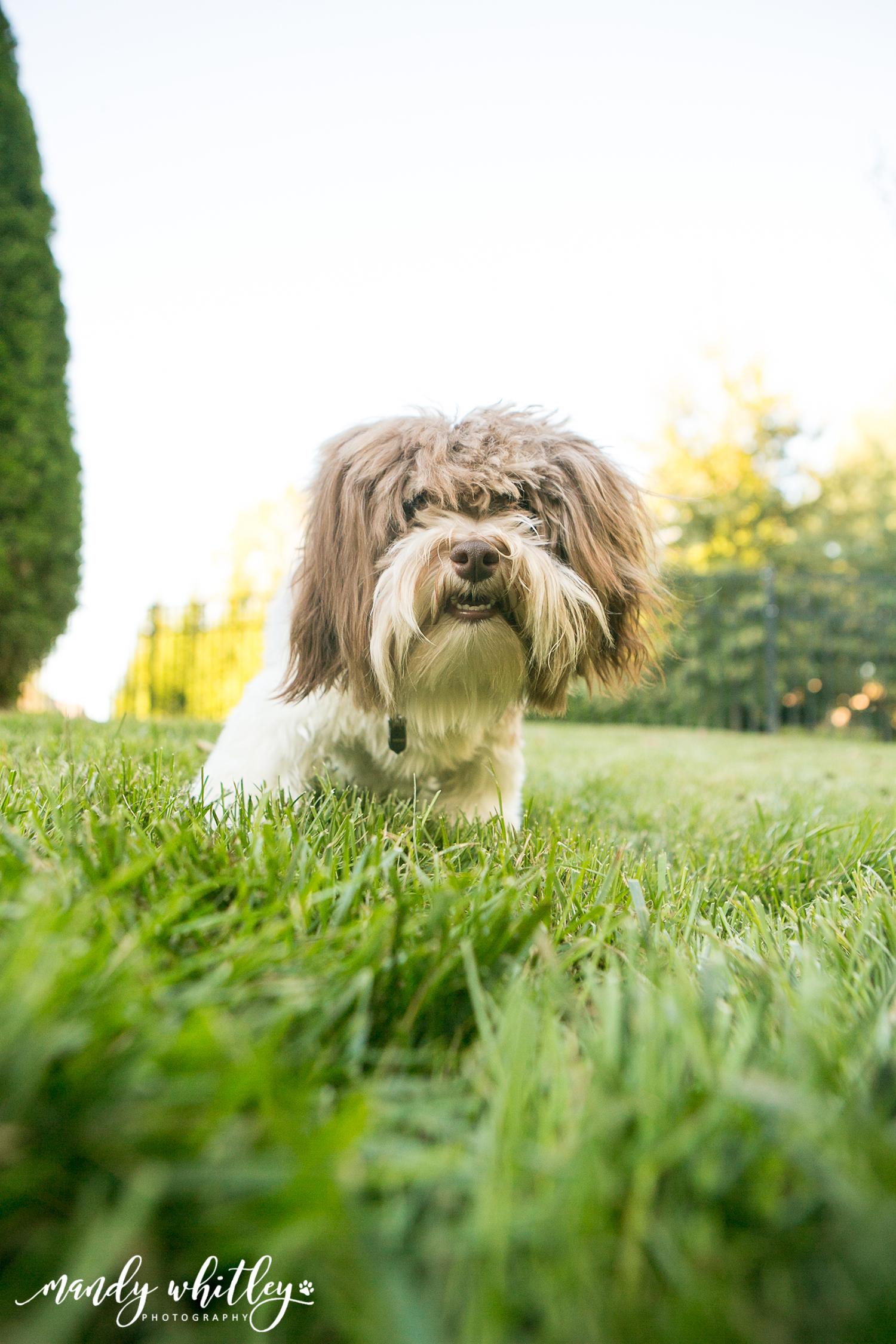 Dog Photographer in Nashville Pet Portraits