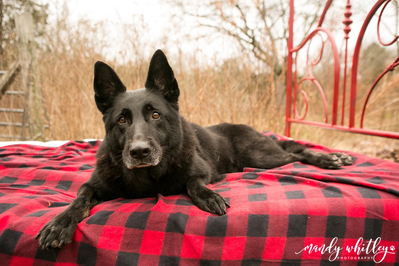 Best Dog Photographer in TN
