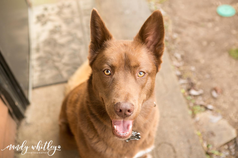 Pet Portrait Photographer in Nashville TN