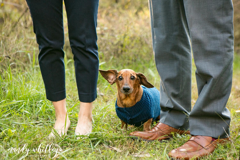 Dog Photographer in Nashville TN