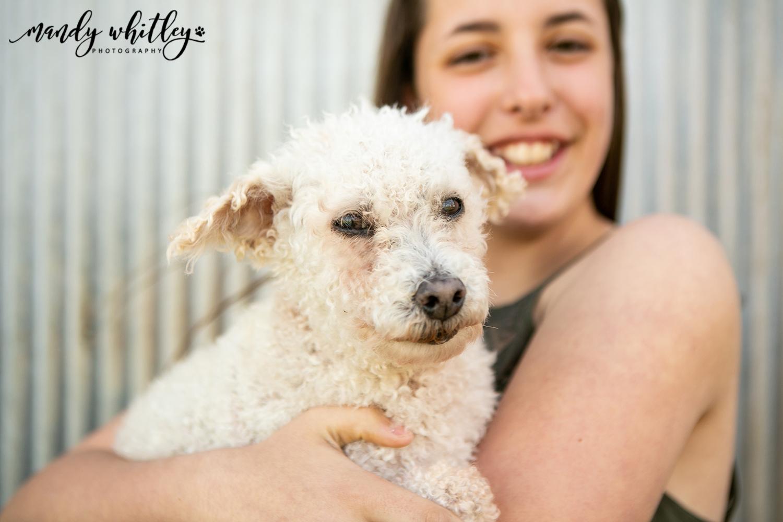 Dog Portrait photographer in missouri nashville