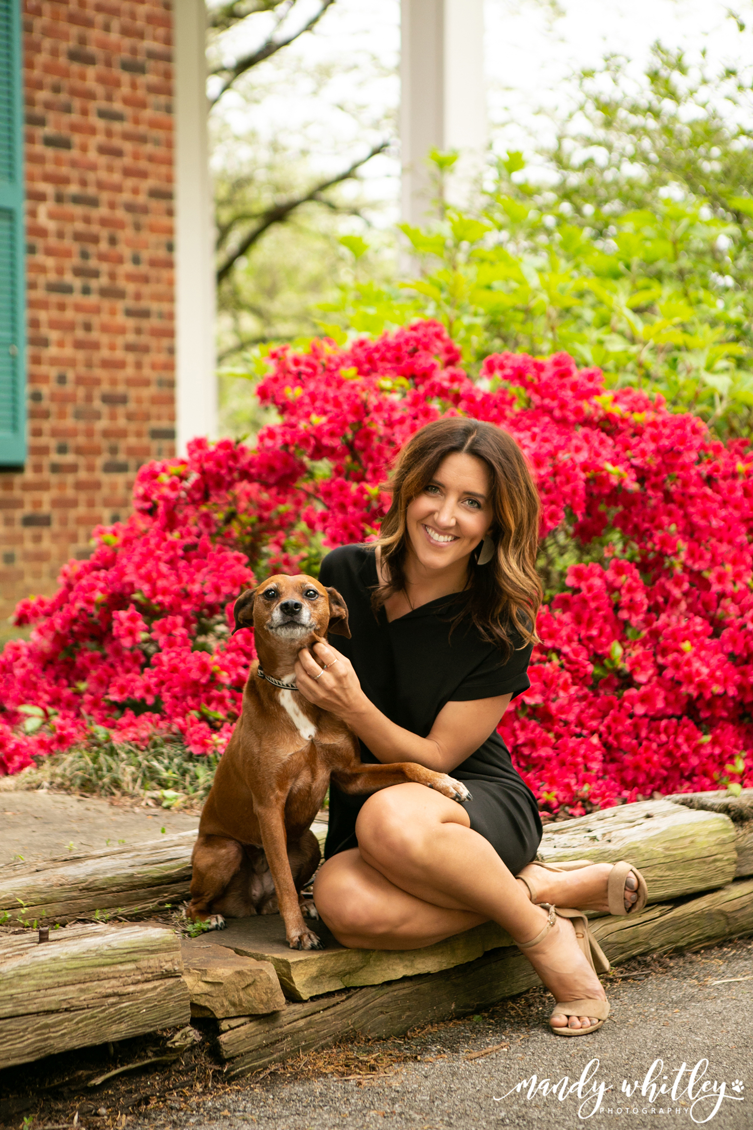 Top Pet Photographer in Nashville TN