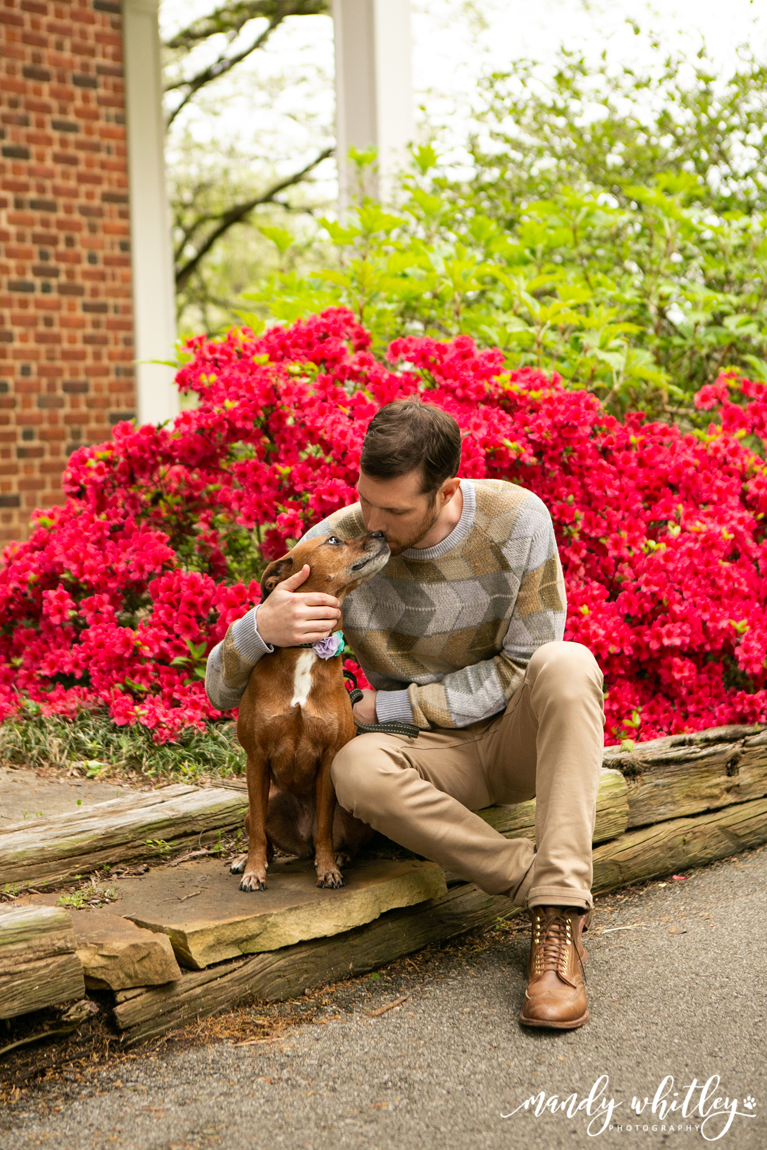Mandy Whitley Photographer Pets and their People