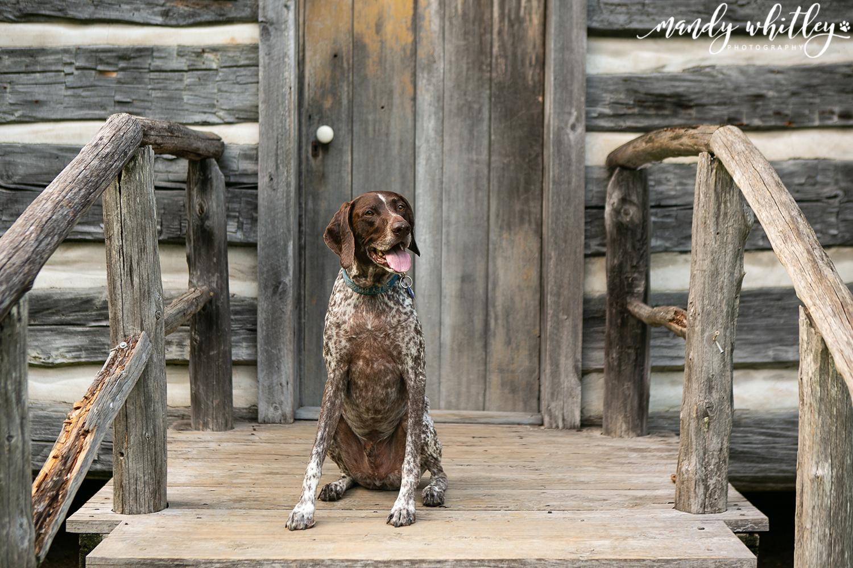 Best Nashville Pet Photographer