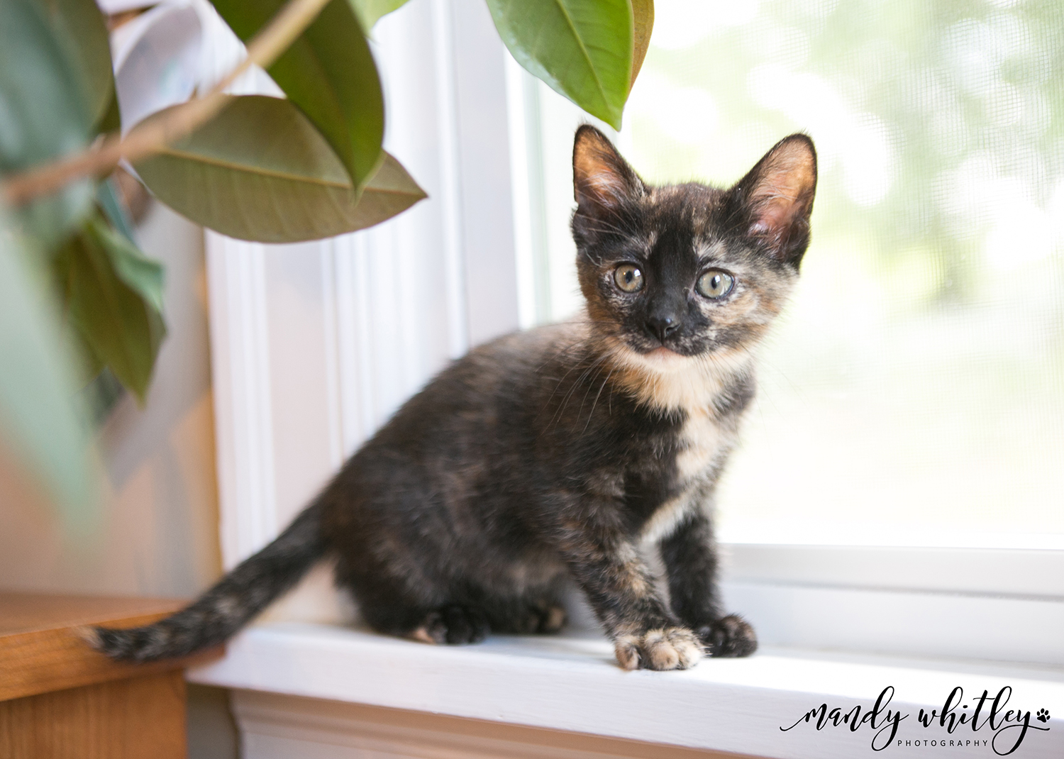 fostering cats in nashville tn