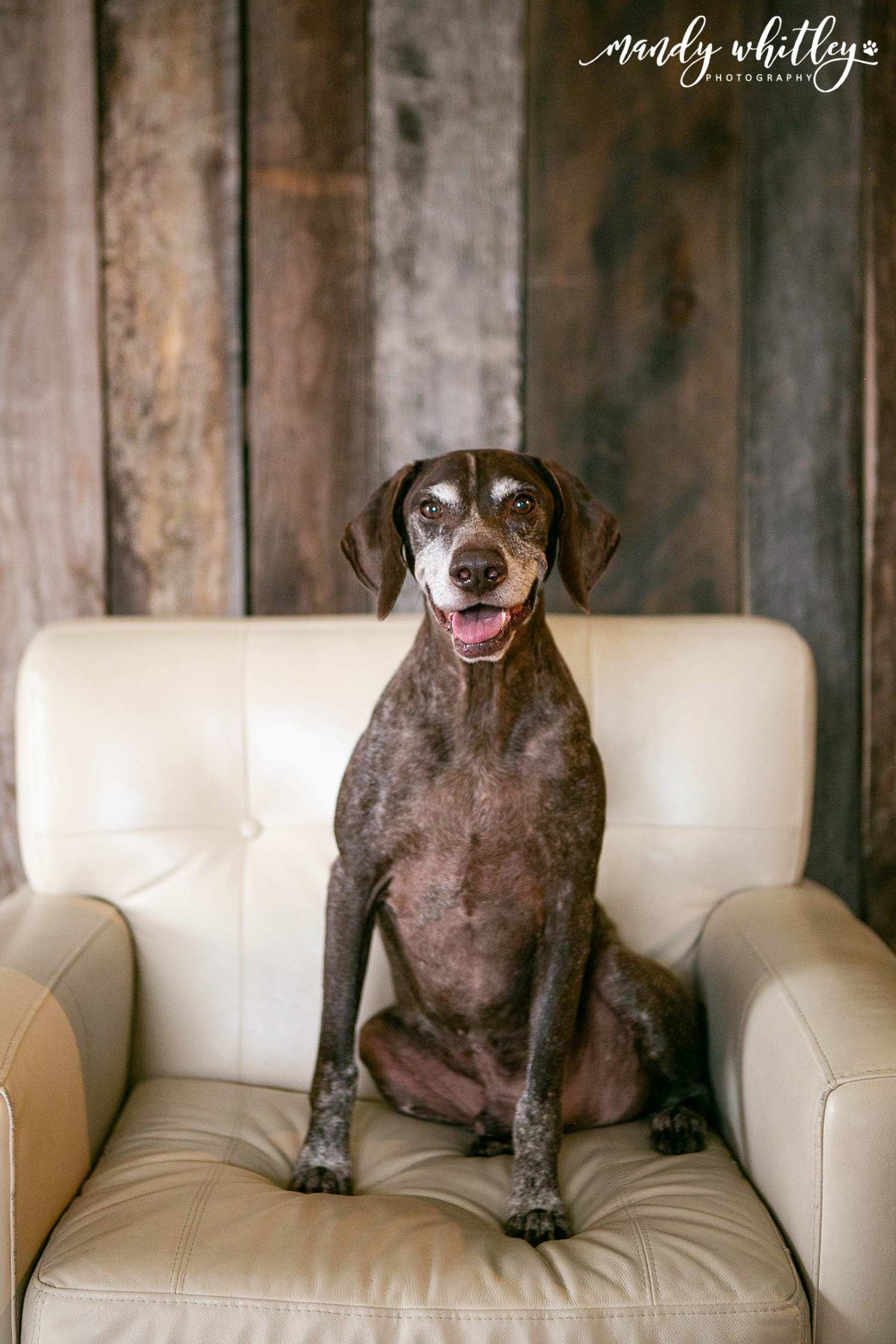 pet photographer in nashville tn