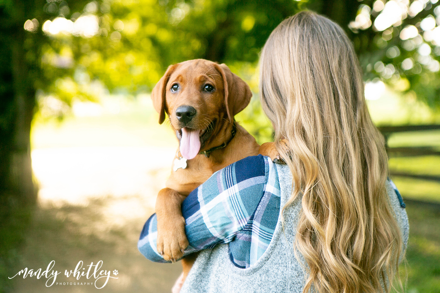 Best dog photographer in Nashville