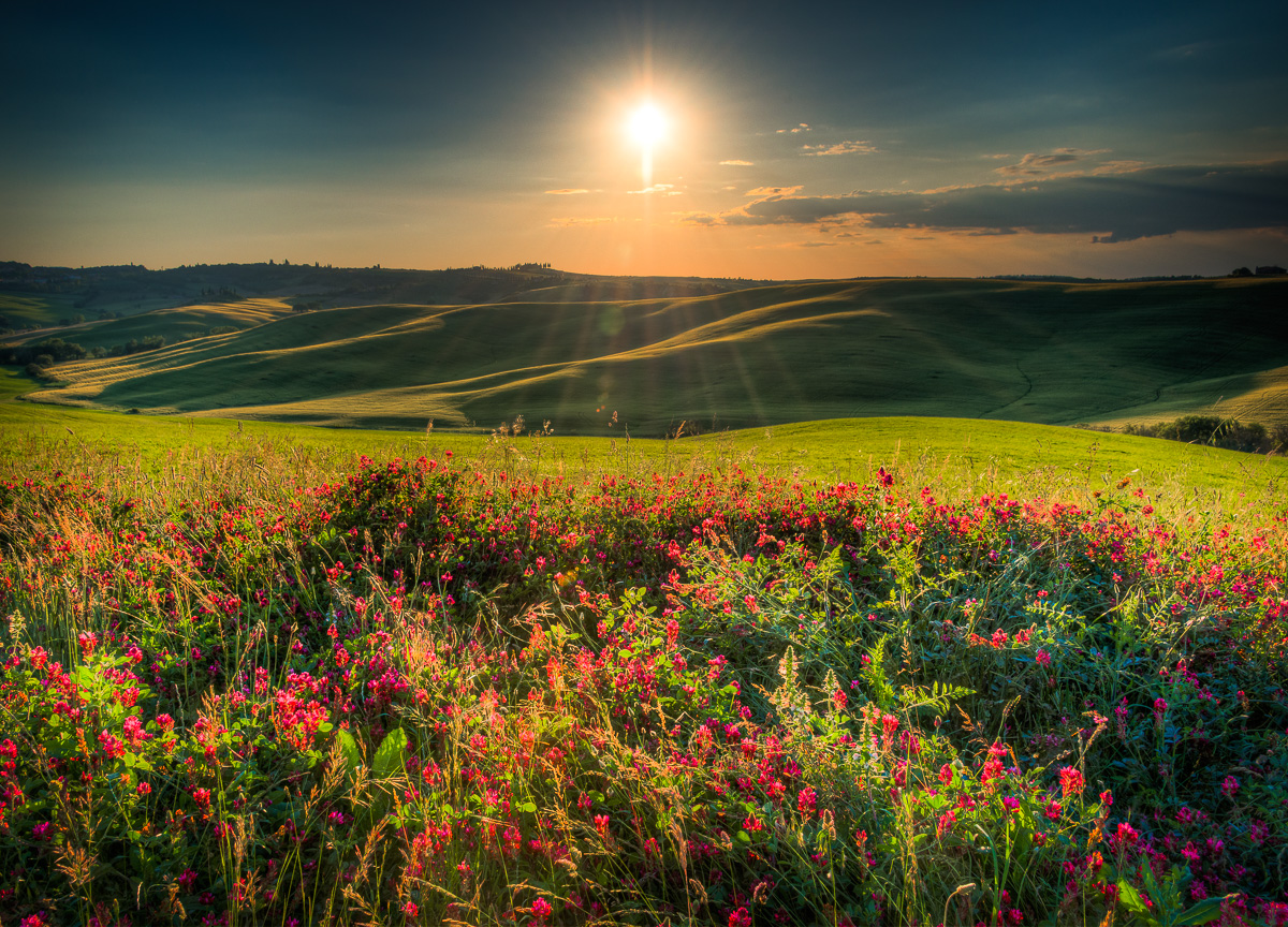 Tuscan Flowers at Sunset