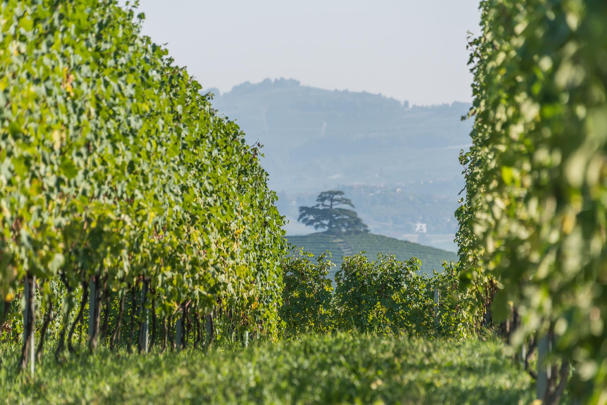 WineryTour-4.JPG
