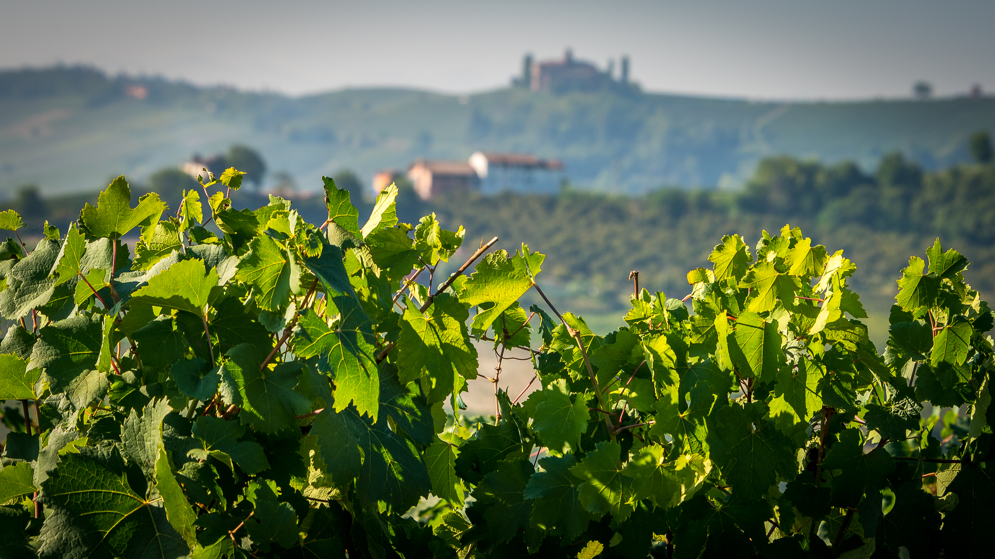 WineryTour-6.JPG