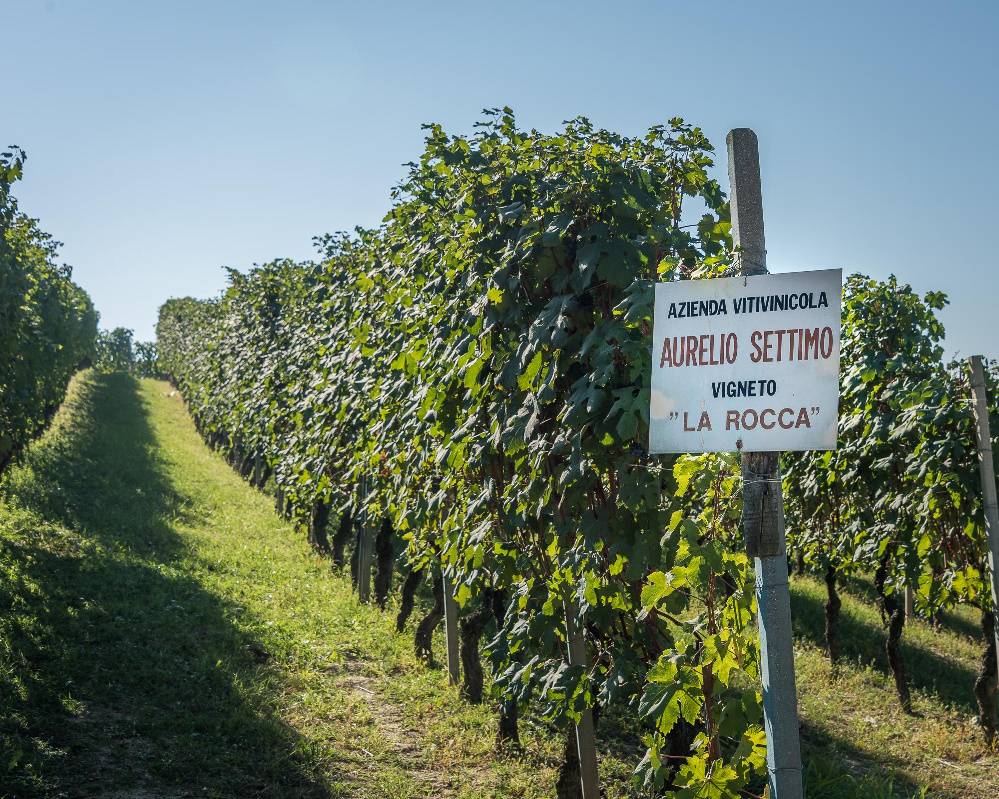 WineryTour-2.JPG
