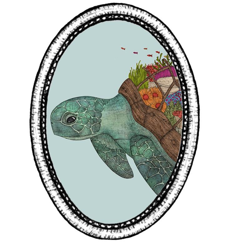 turtle index.jpg