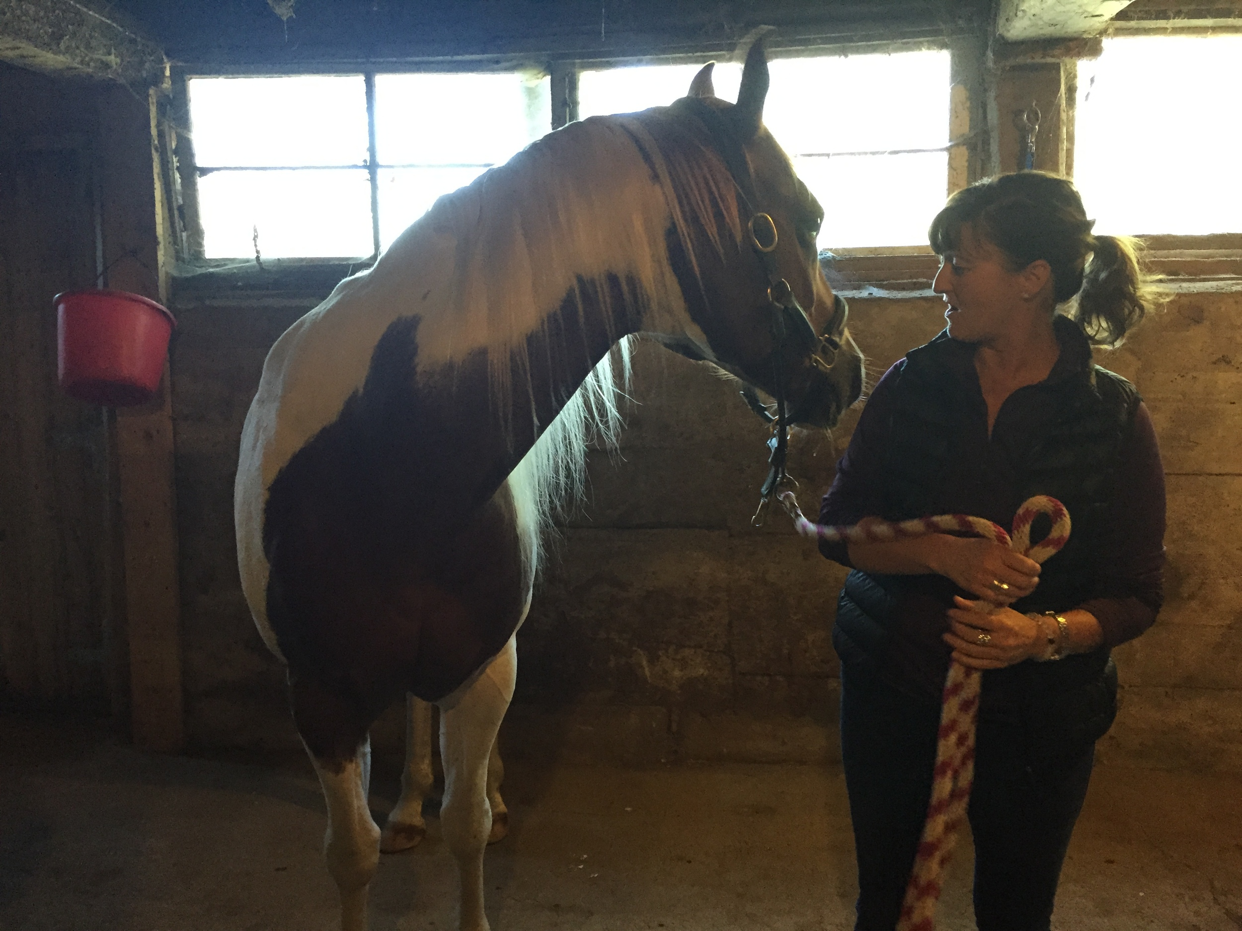 Farmhouse owner Sam, and one of her beautiful horses