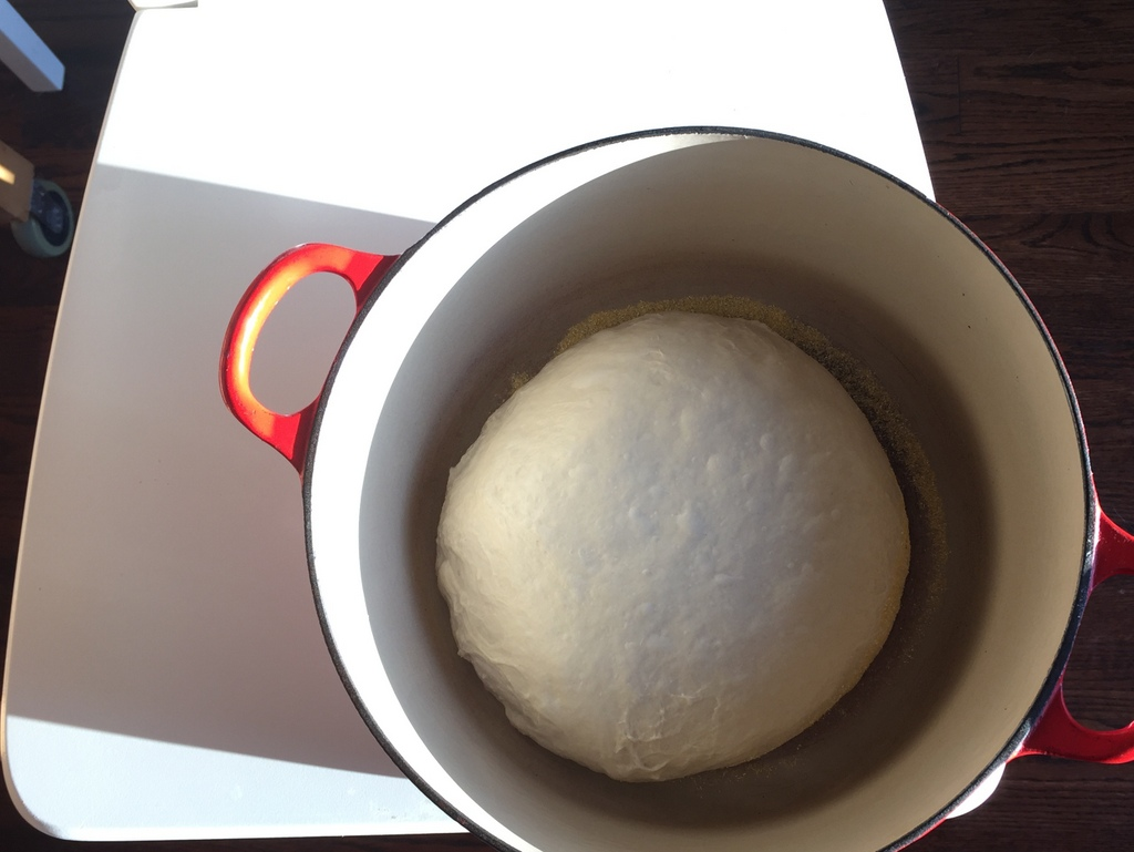 After weeks of figuring out the starter, I finally made a ball of dough before bed, said a short prayer, and hoped that the next morning I would have something that i could put in the oven. This ball of dough looked flat and sad, but it went in the oven, and came out not too bad!