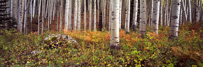 October Forest Floor