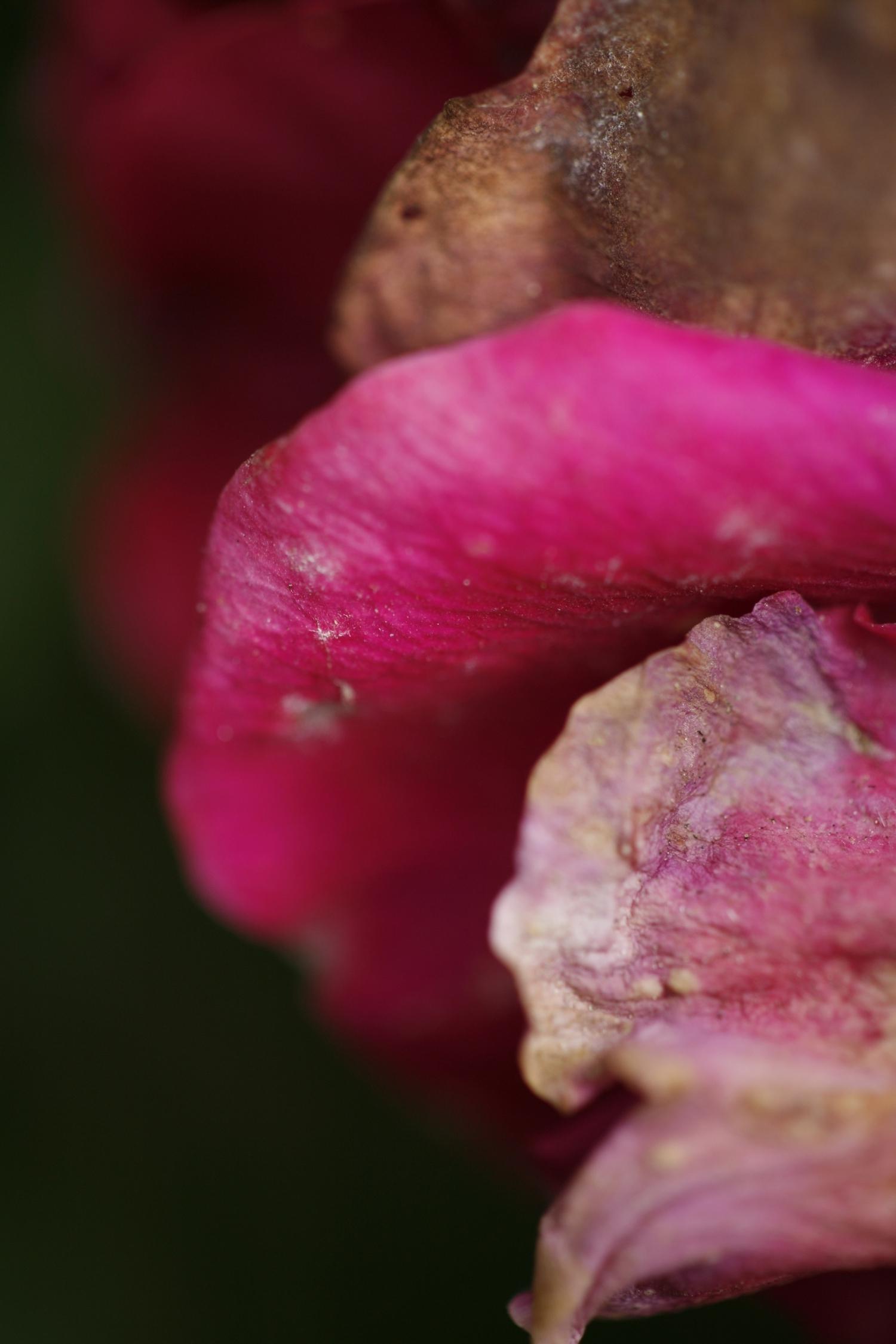 flower11 copy.jpg