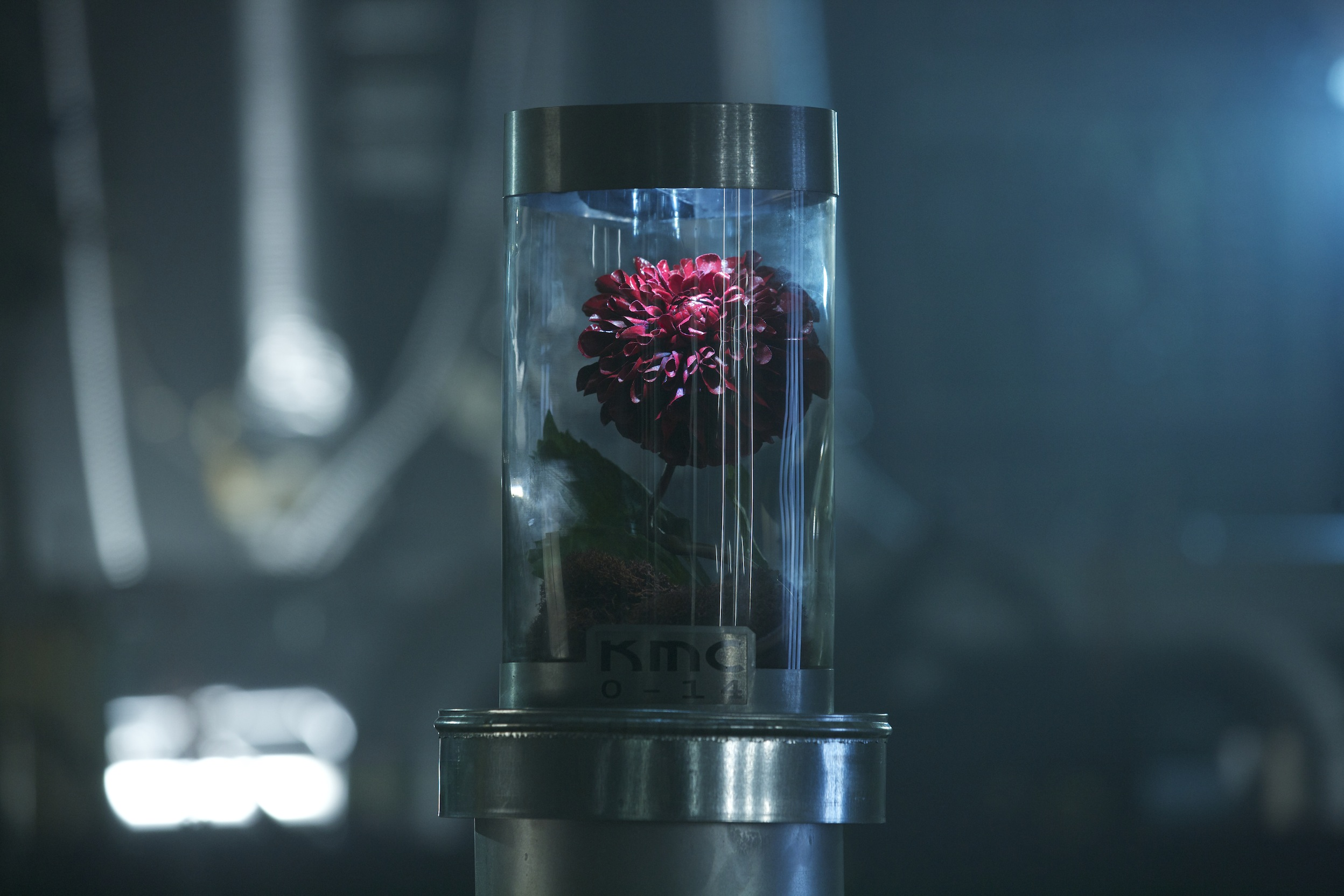 synchronicity flower.jpg