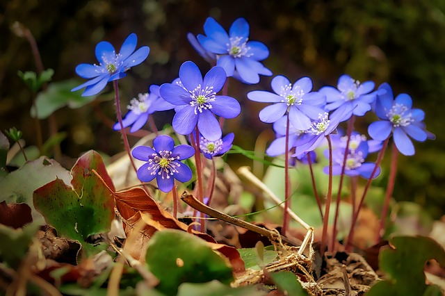 flower-3204966_640.jpg