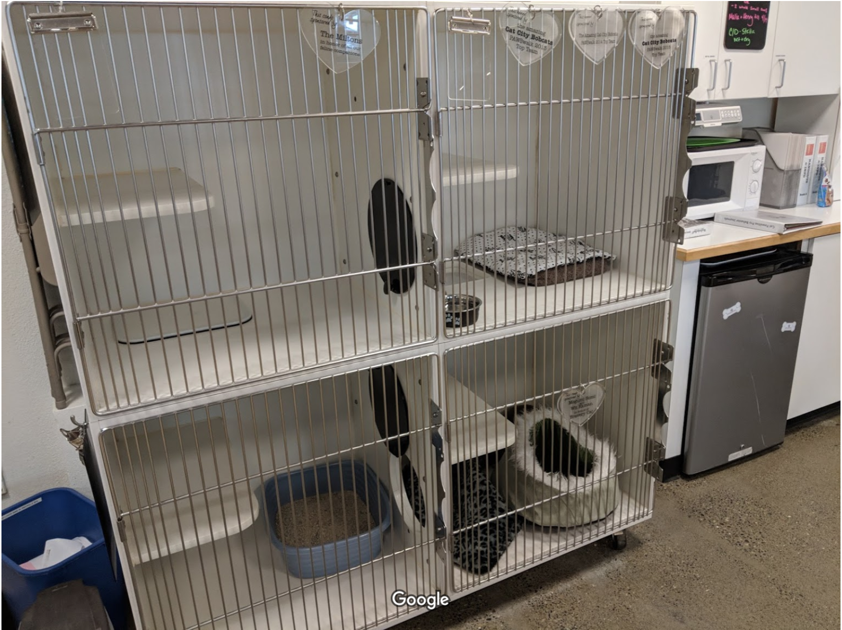 Empty cages at PAWS Cat City in the University District (a good thing)