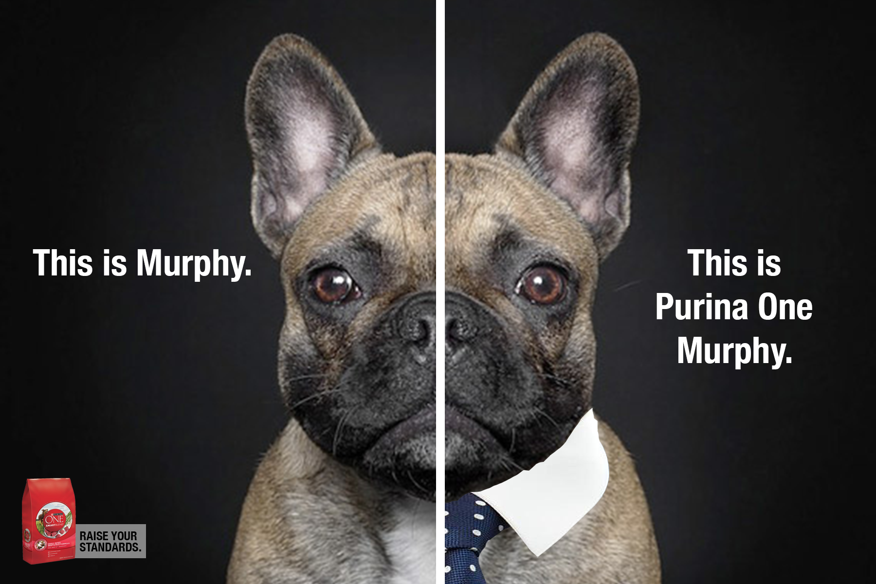 PurinaOne_Murphy.png