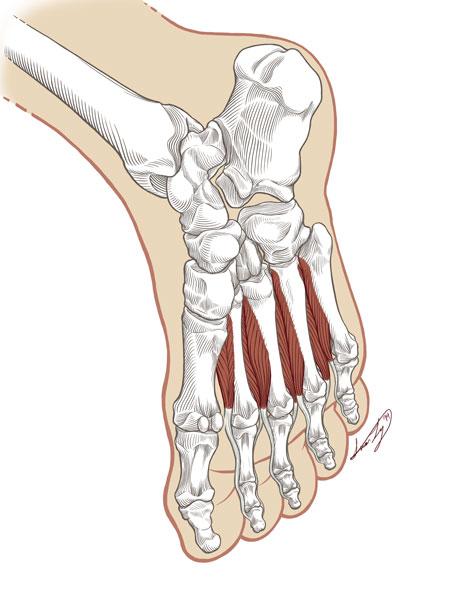 Ly_N_Foot_Illustration4.jpg