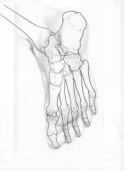 foot-illustration.jpg