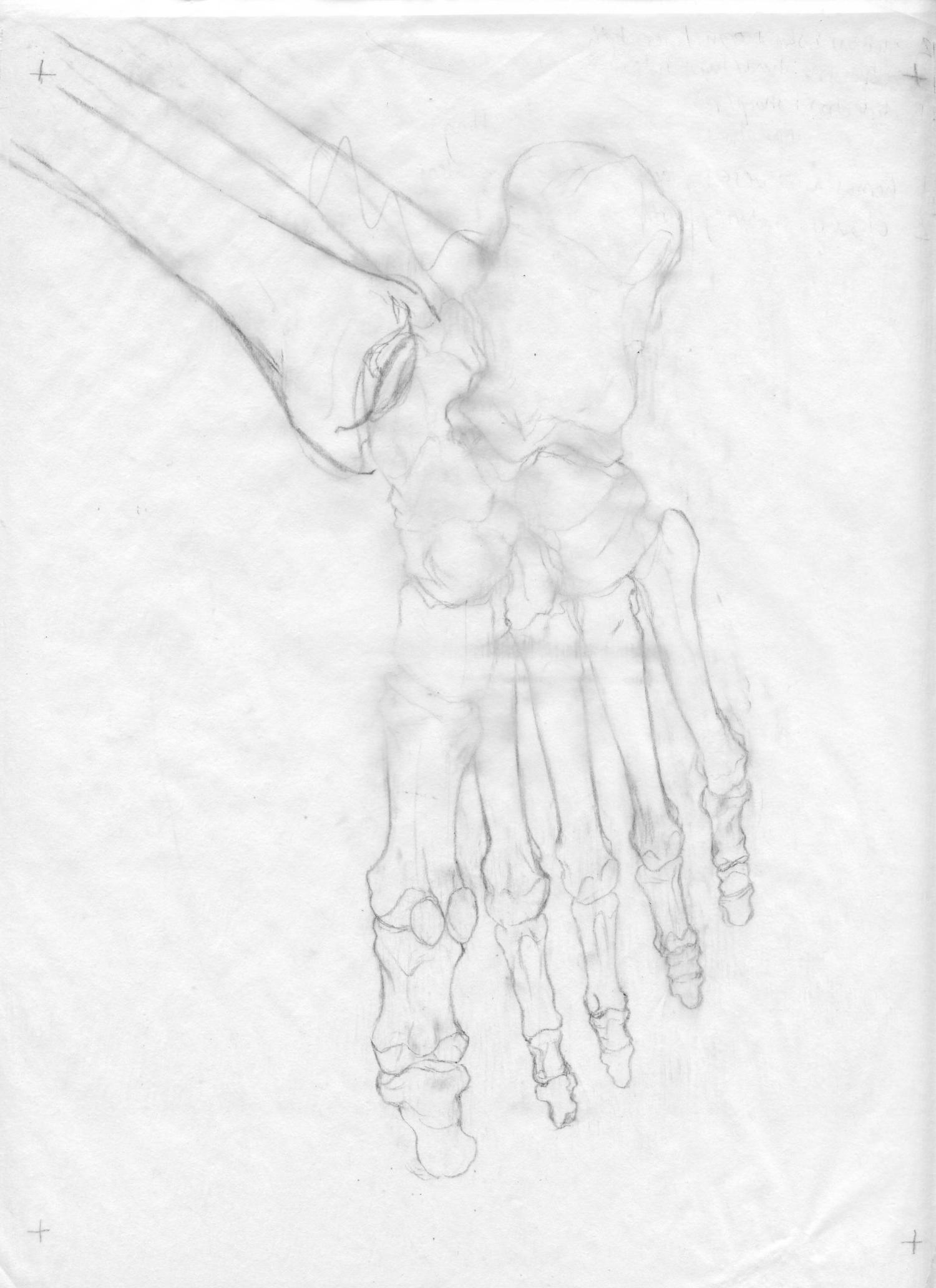 bones sketch.jpg