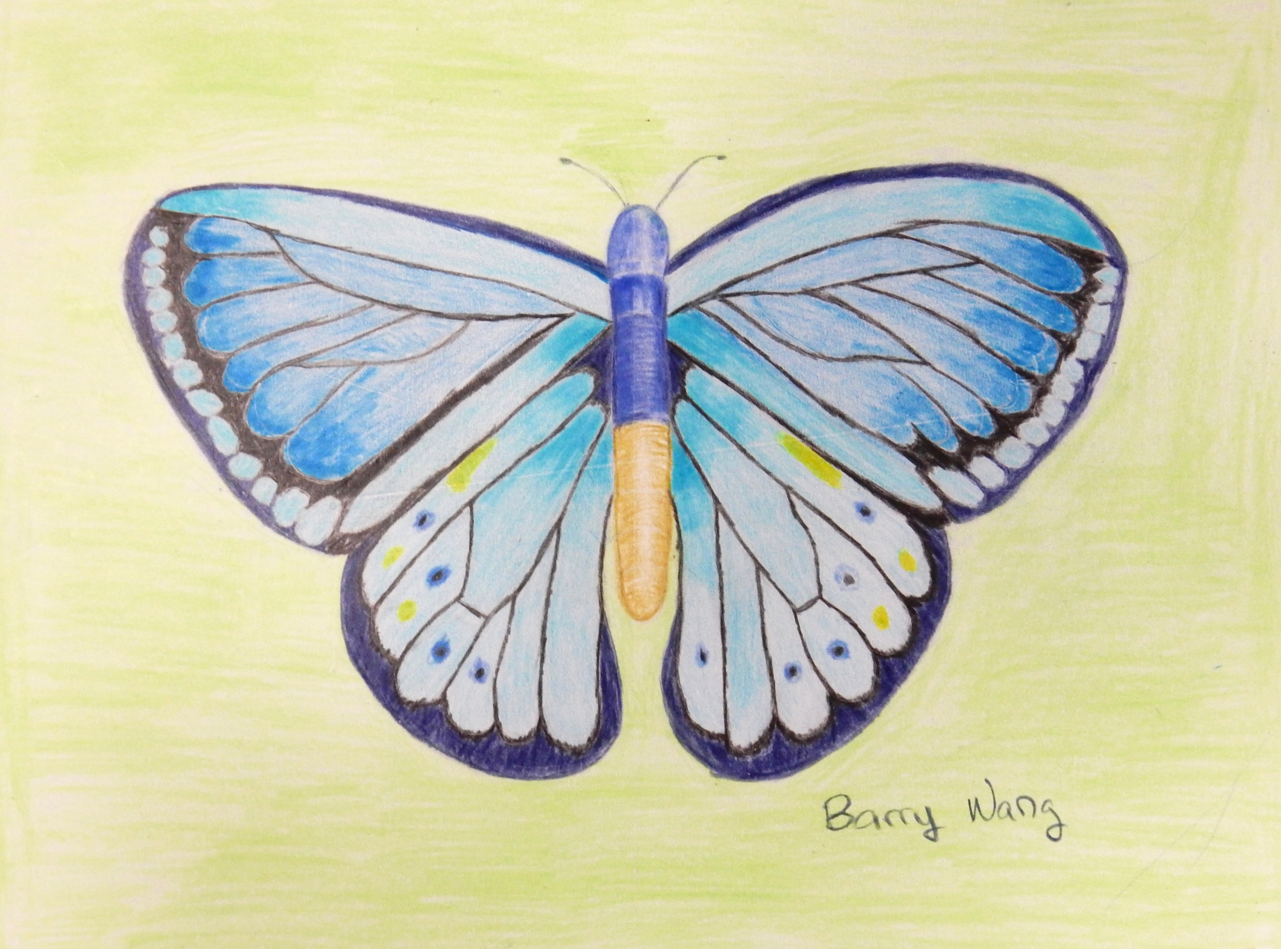 Barry Wang.11yrs.colored pencil.Butterfly.2016