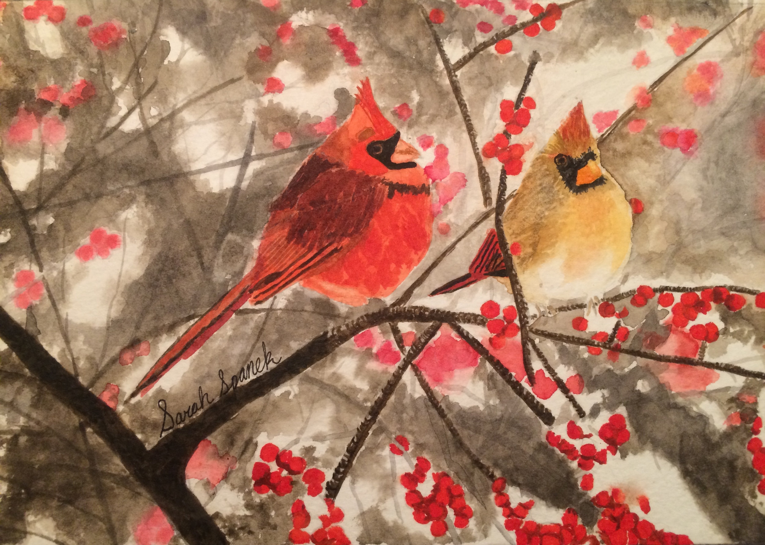 Sarah Spanek.7th grade.watercolor.Winter Cardinals