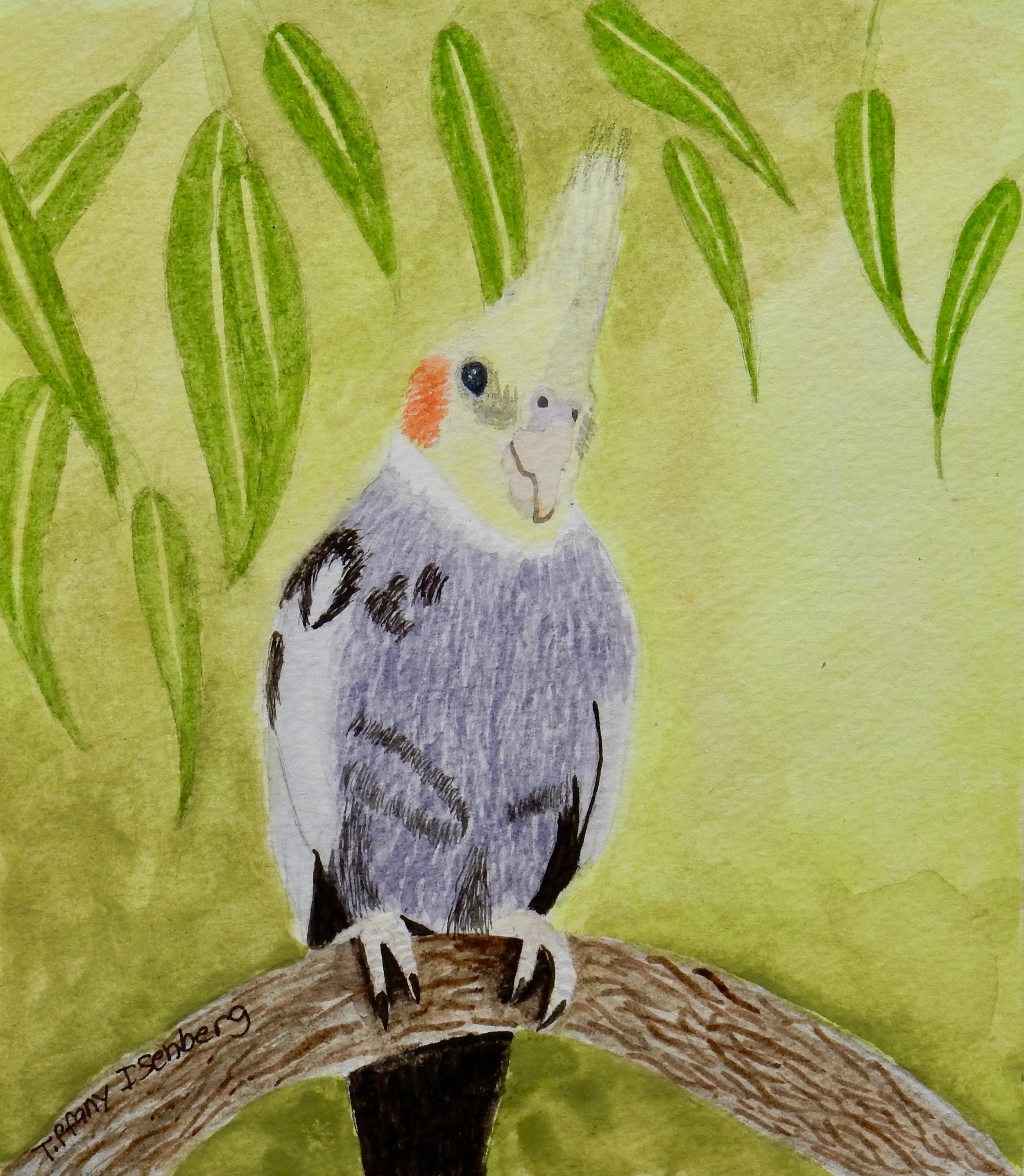 Tiffany Isenberg.12yrs.watercolor bird