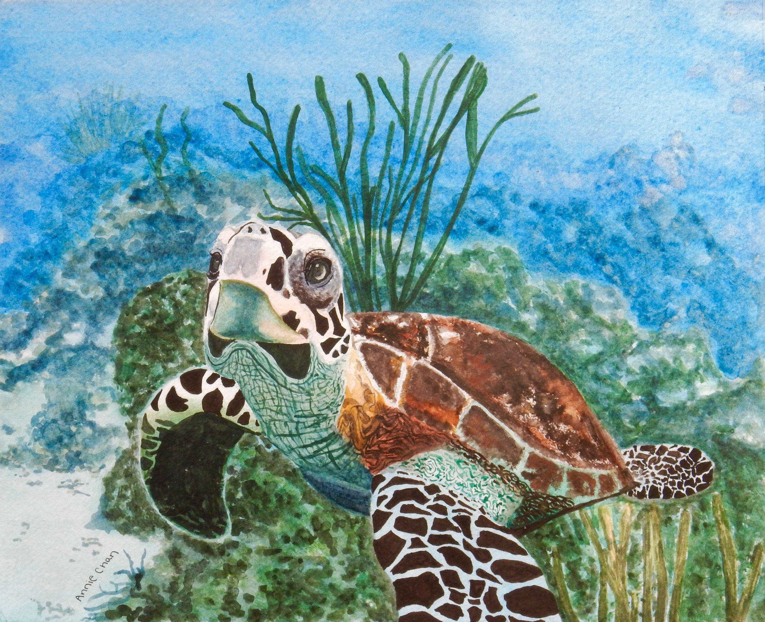 Annie Chan.8th grade.watercolor.Sea Turtle