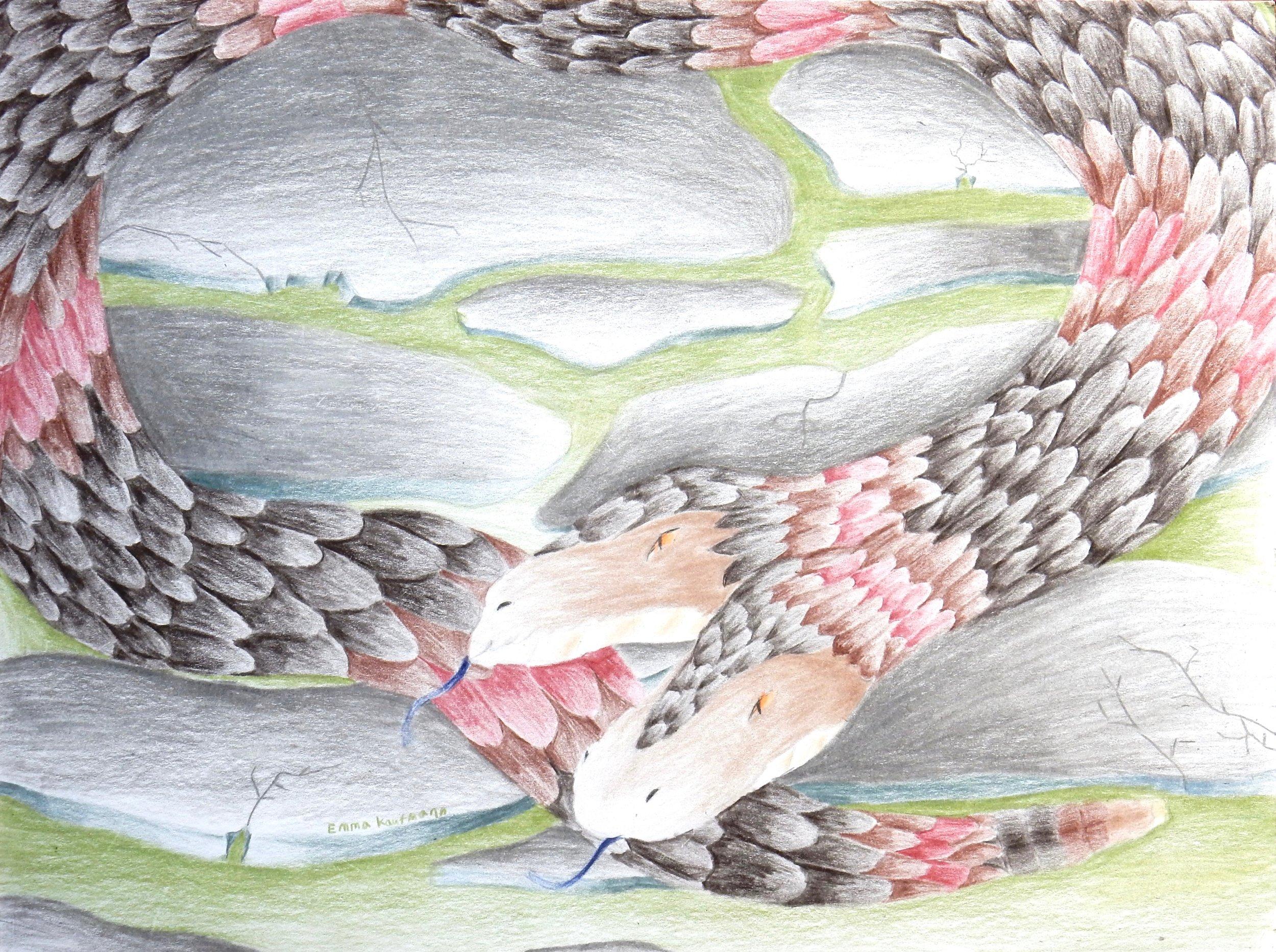 Emma Kaufmann.14 yrs.colored pencil