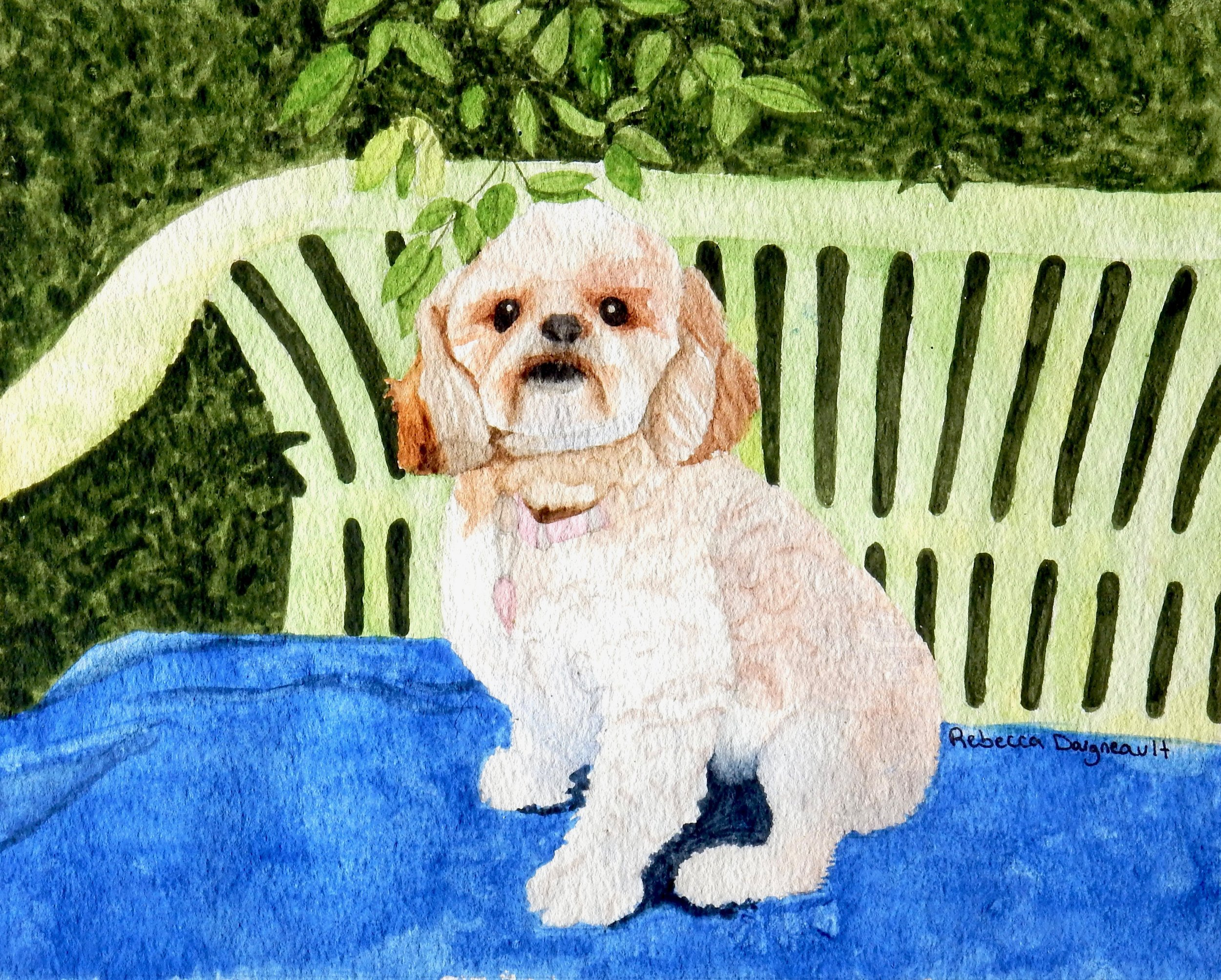 Rebecca Daigneault.watercolor.A Fluffy Friend