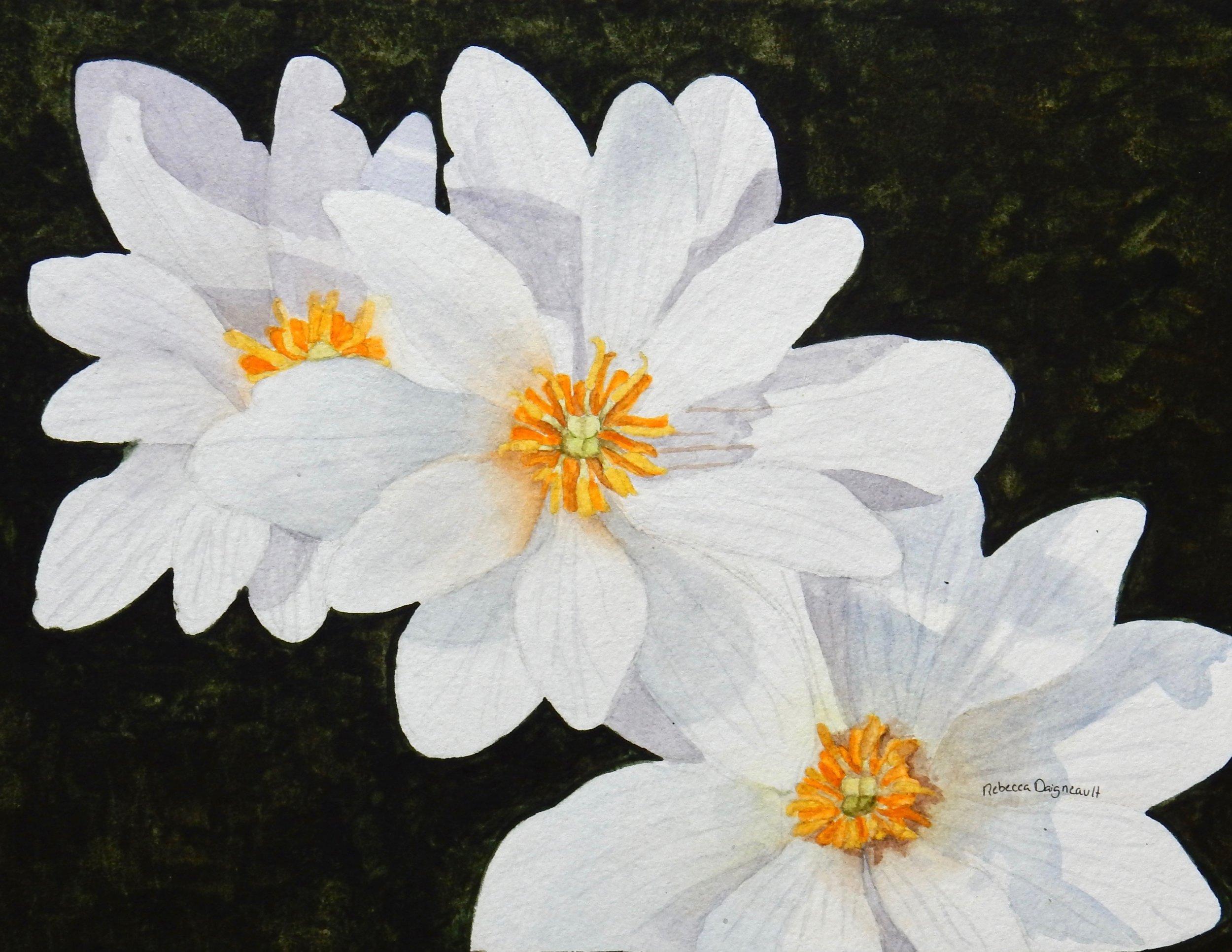 Rebecca Daigneault. Simple Flowers. watercolor