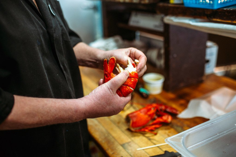 A lobster being prepared. Credit: Press Herald