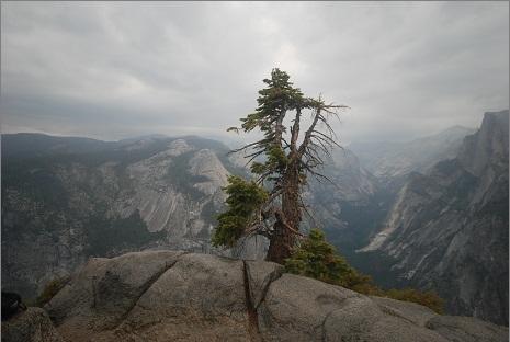 That Tree2.jpg