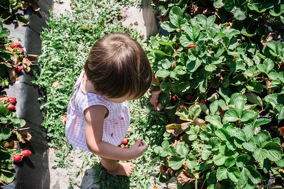 berries5.jpg