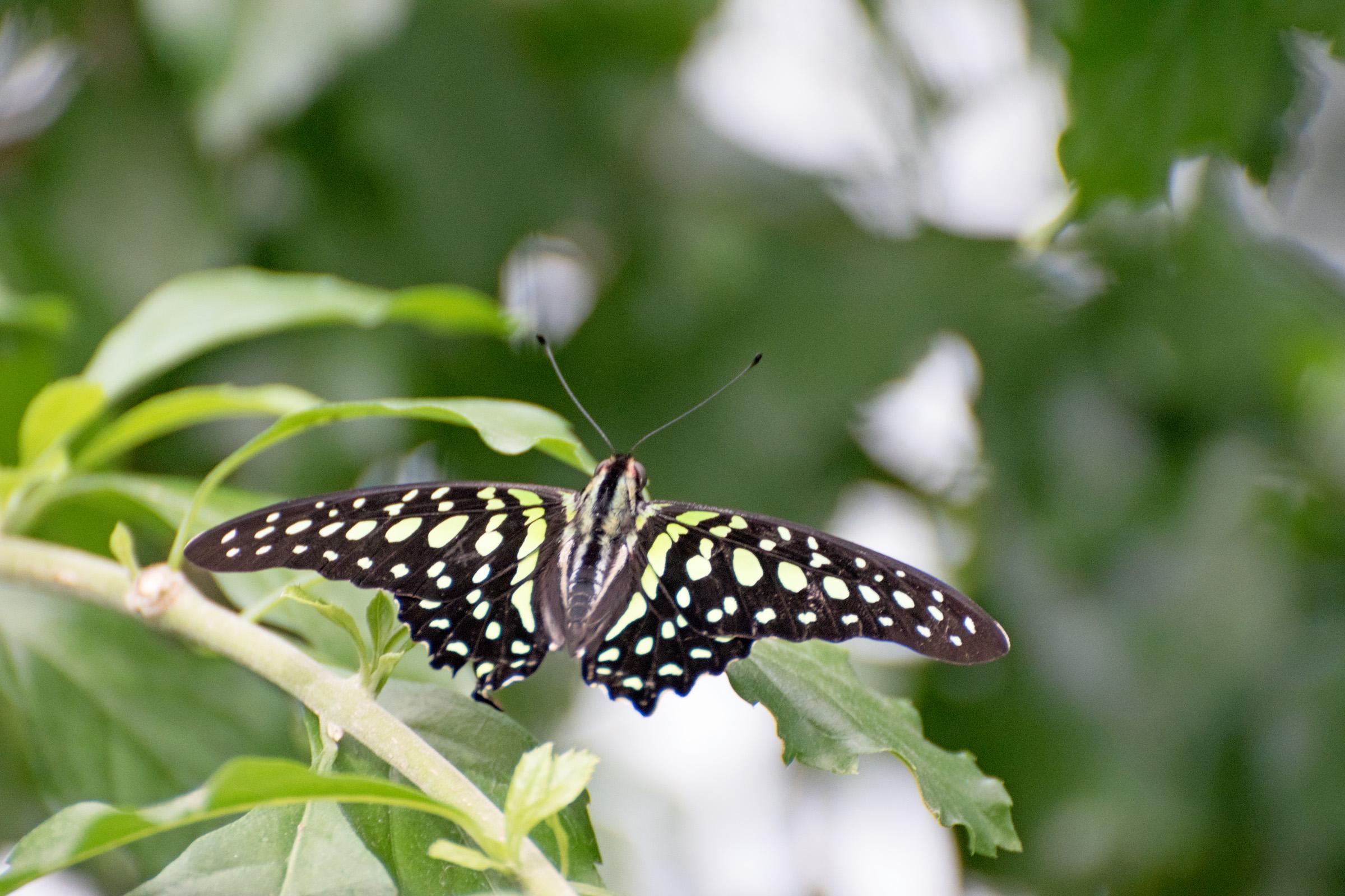 2018 Butterfly Conservatory_0100.jpg