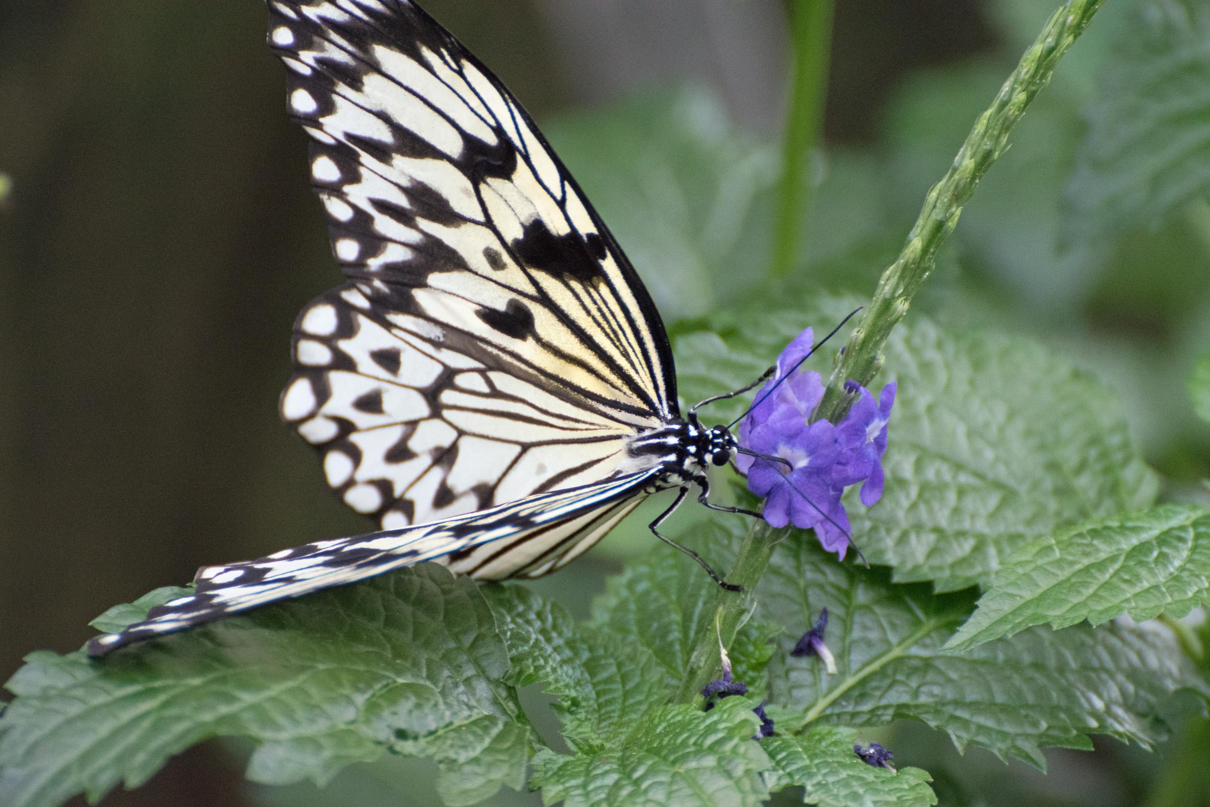 2018 Butterfly Conservatory_0091.jpg