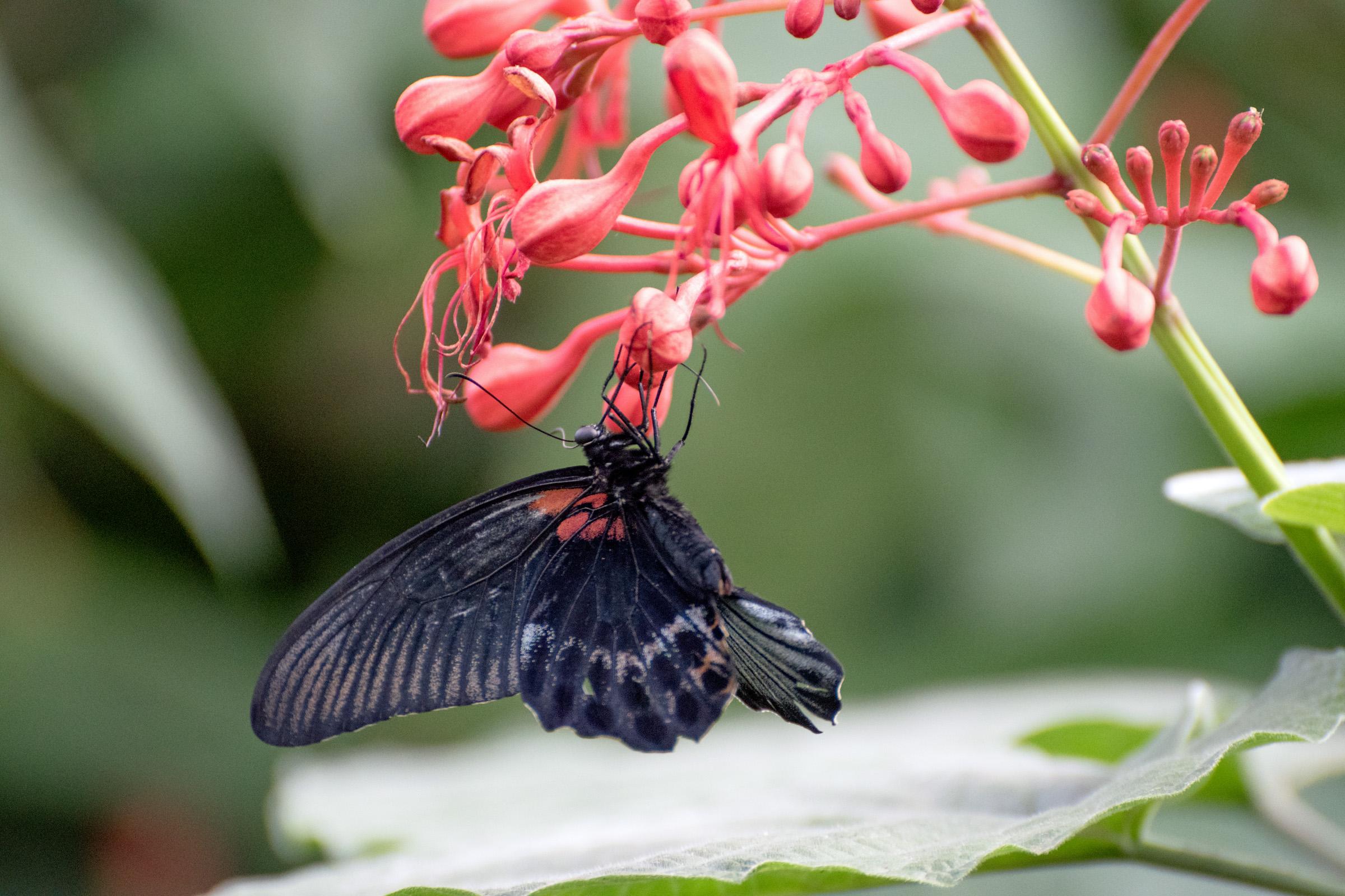 2018 Butterfly Conservatory_0131.jpg