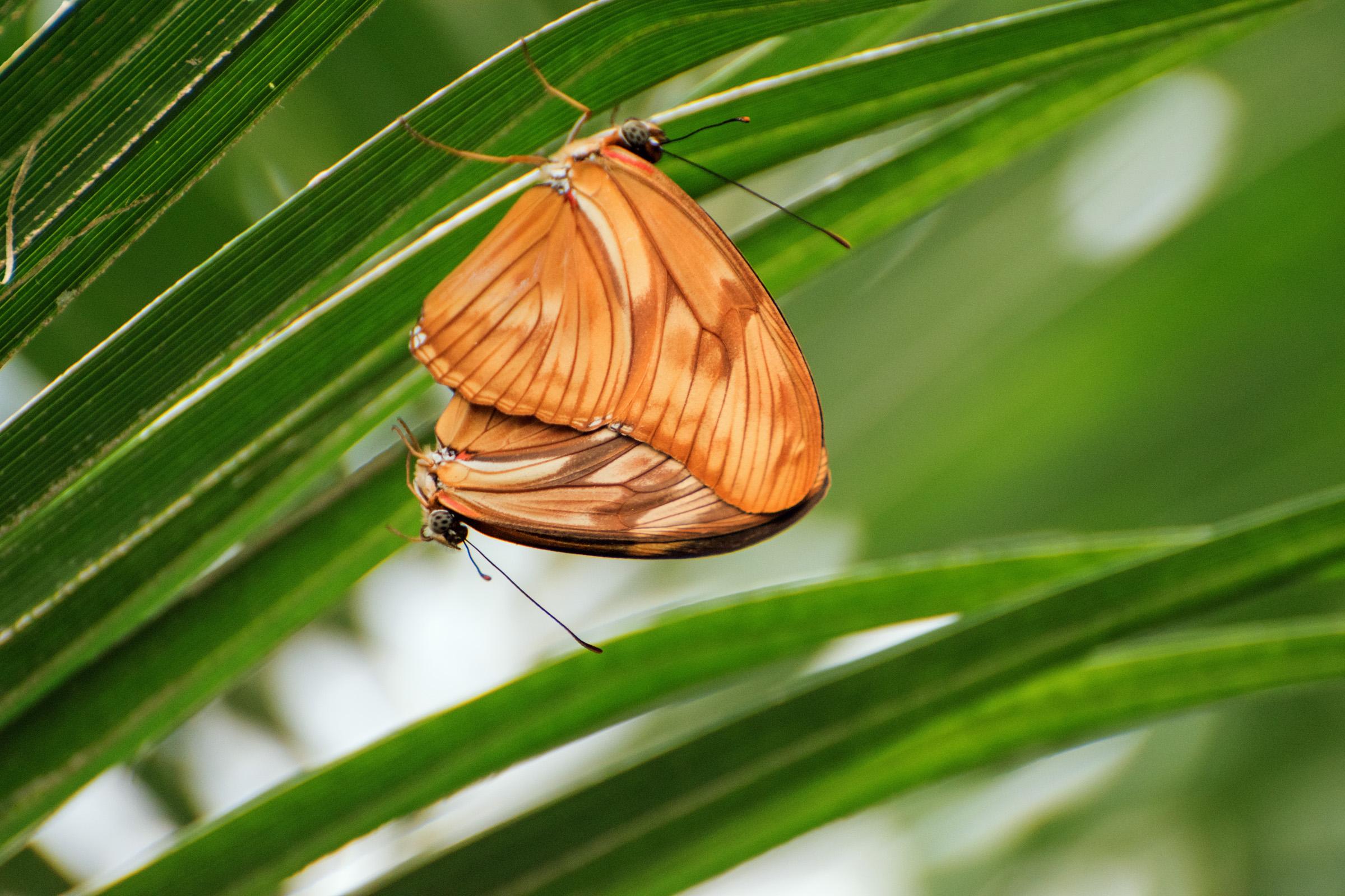 2018 Butterfly Conservatory_0144.jpg