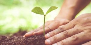plant a tree 300.jpg