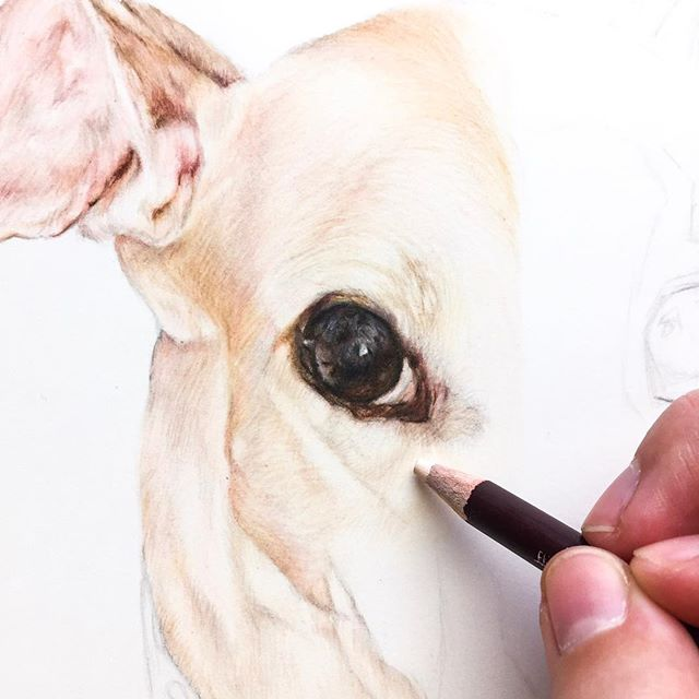 Around 15 different pencils were used to create this greyhound's eye 👁