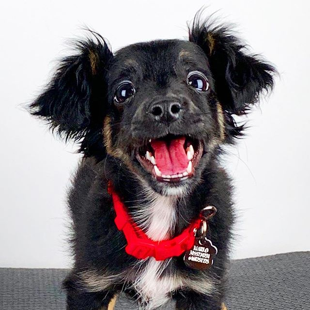 Marlo is a very good boy.