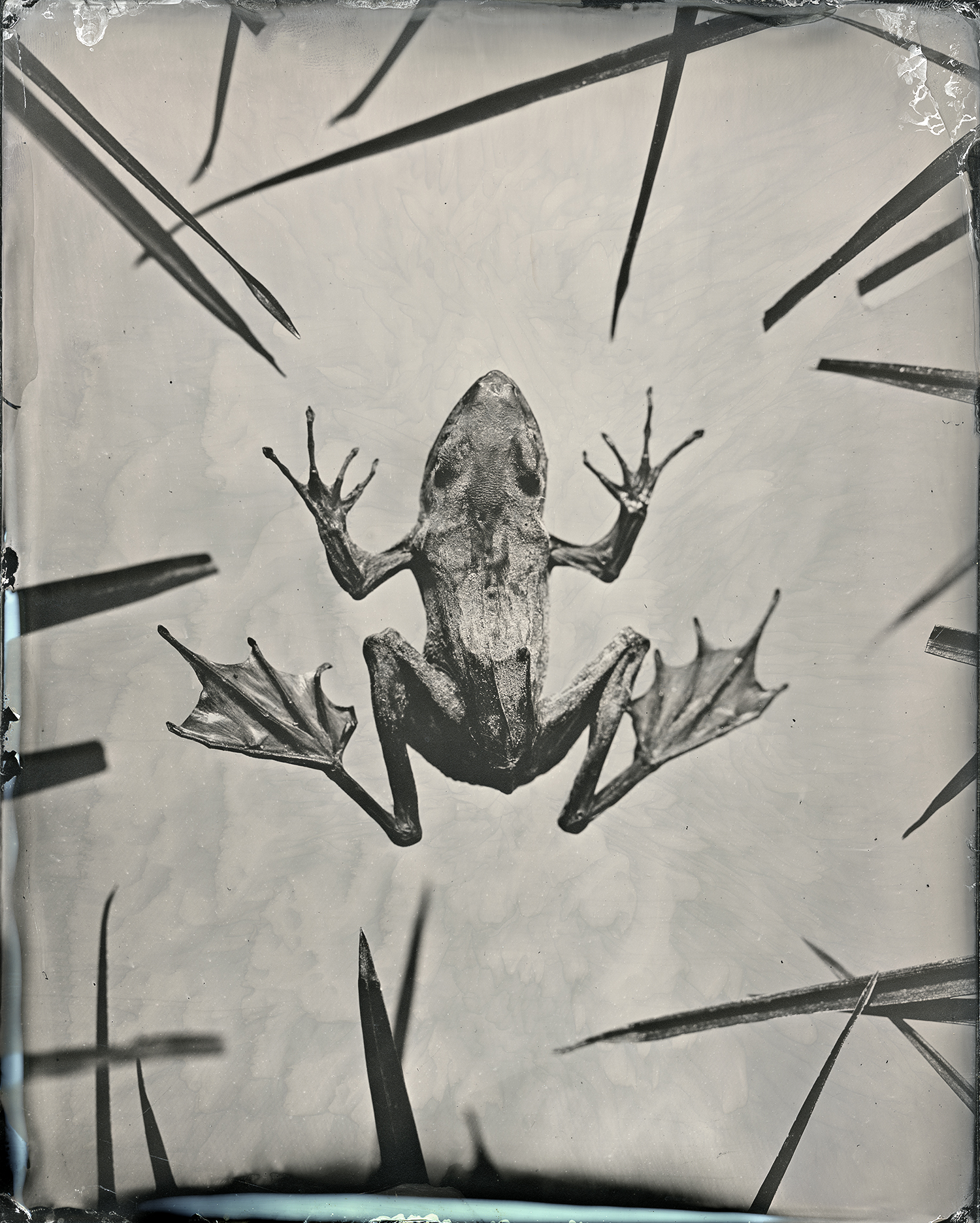 webbbbbb_worked_frog_glass_original_scan.jpg