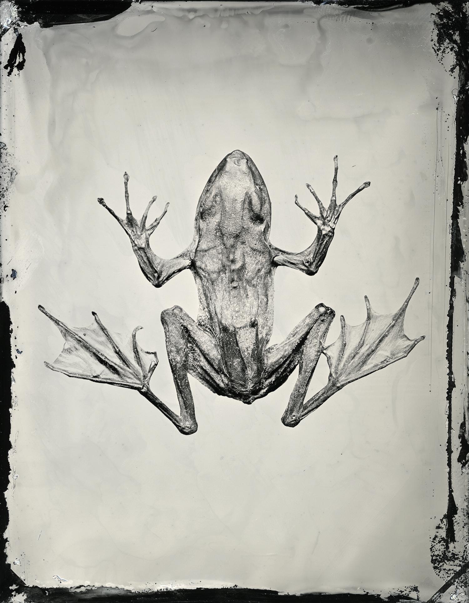 web_frog_site.jpg