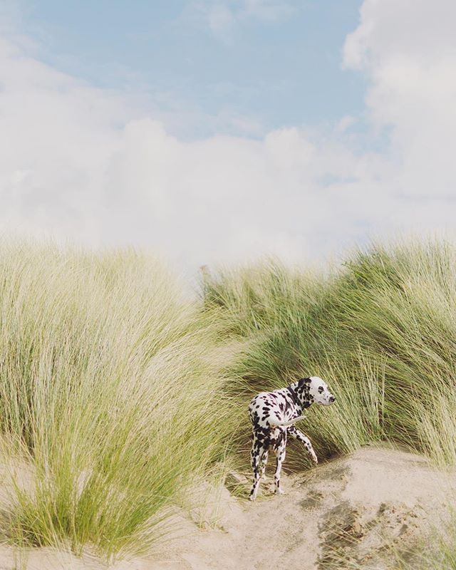 I think Pepper is having as much fun in the sand dunes as I do! :D