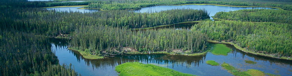 A boreal forest landscape.