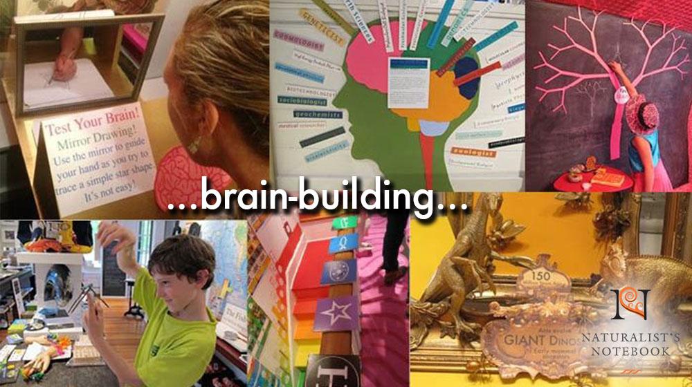 brainbuildingslide.jpg