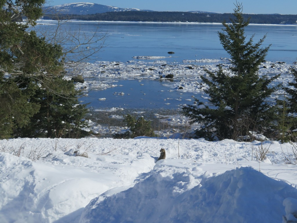 He paused to take in the coastal Maine view.